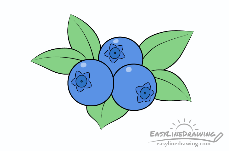Blueberries drawing