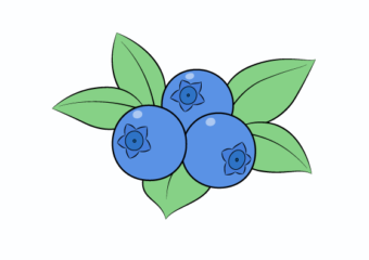 How to Draw Blueberries Step by Step
