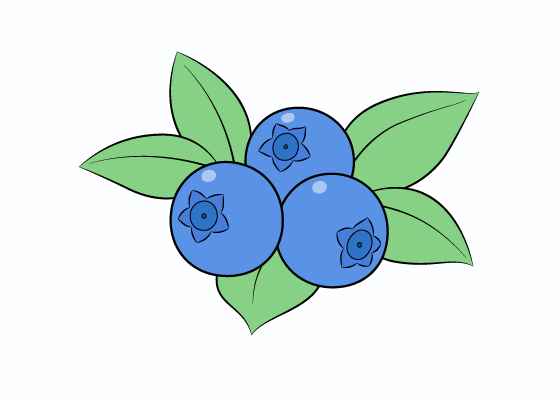 Blueberries drawing tutorial