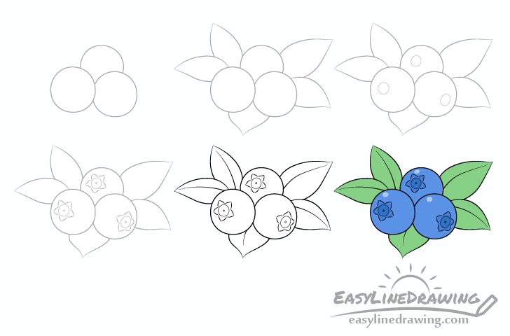 Blueberries drawing step by step