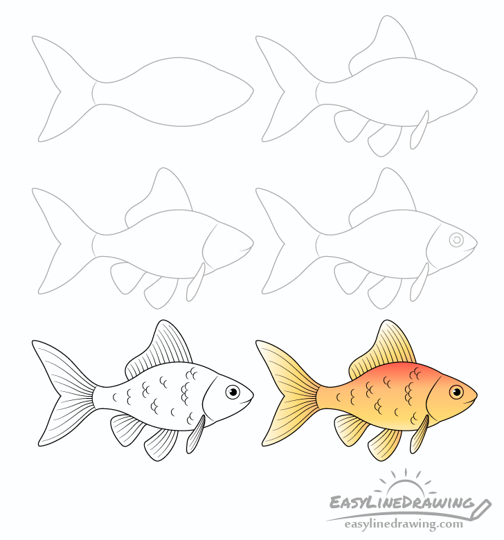 Goldfish drawing step by step