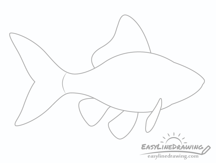 Goldfish fins drawing