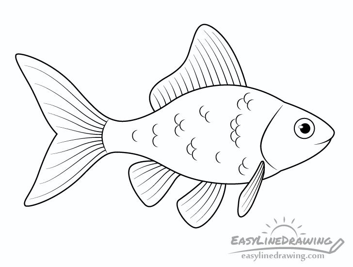 Goldfish line drawing