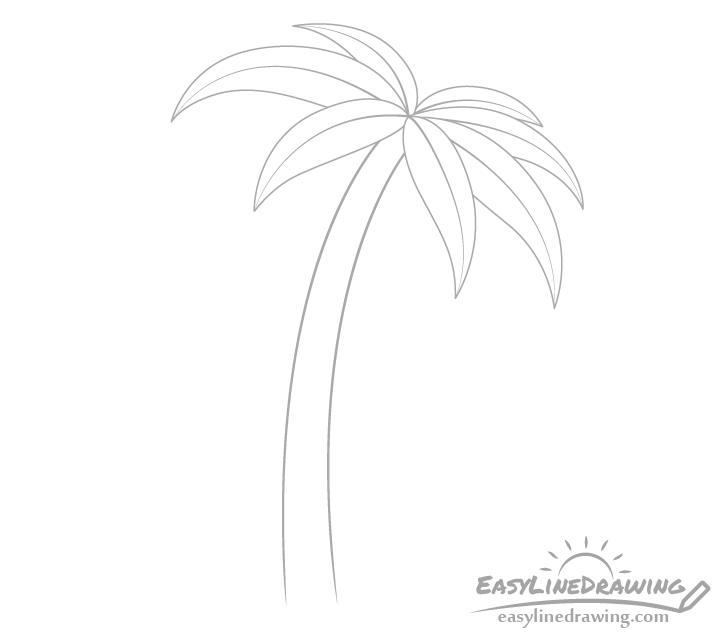 Palm tree rachis drawing