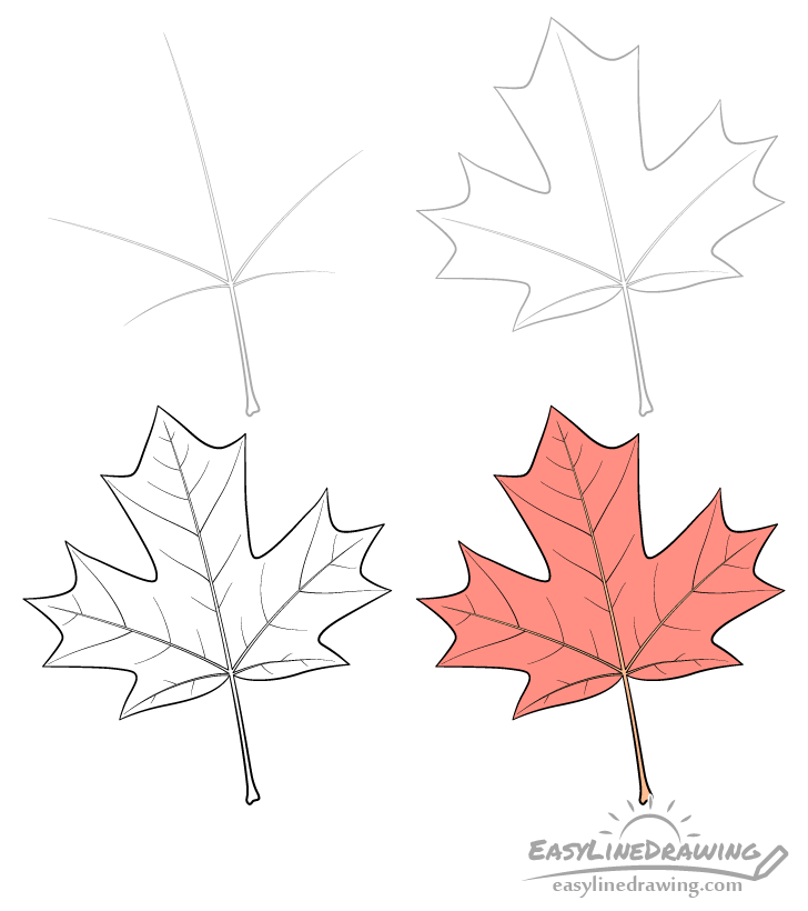 Maple leaf drawing step by step