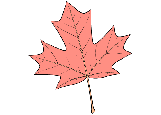 Maple leaf drawing tutorial