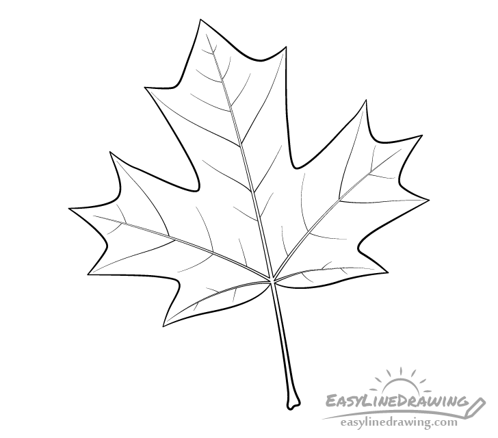 Maple leaf line drawing