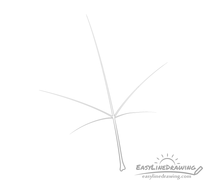 Maple leaf veins drawing
