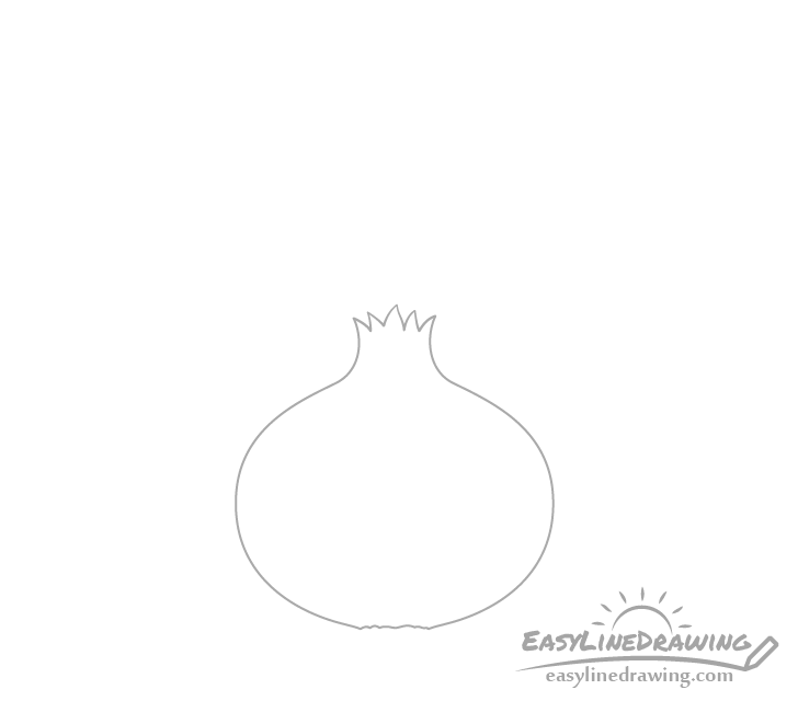 Onion bulb drawing