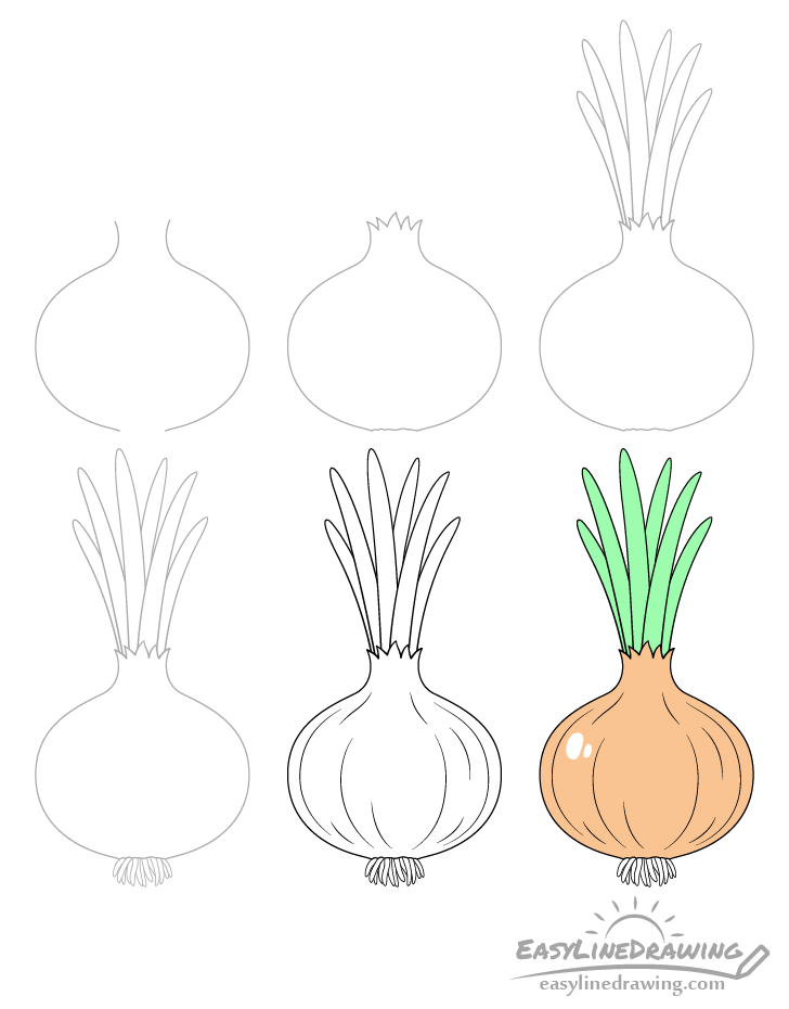 Onion drawing step by step
