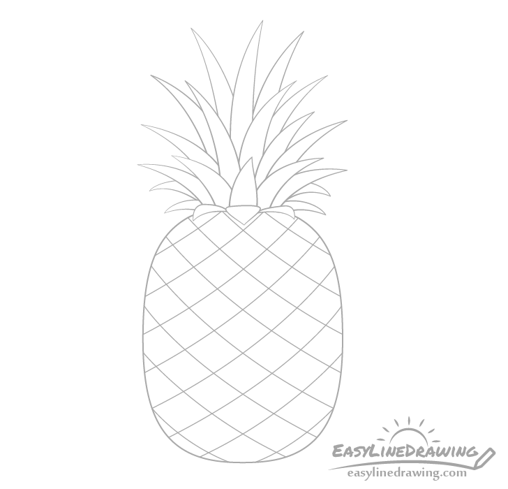Pineapple section drawing