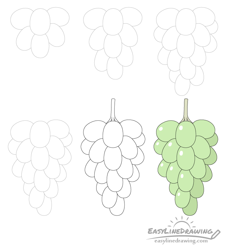 Grapes drawing step by step