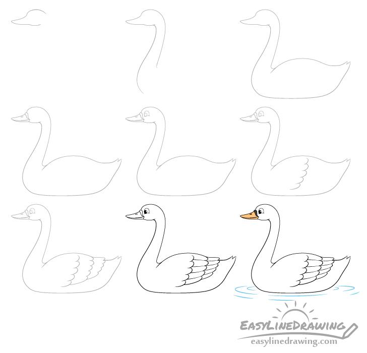 Swan drawing step by step