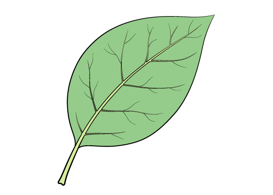 Leaf drawing tutorial