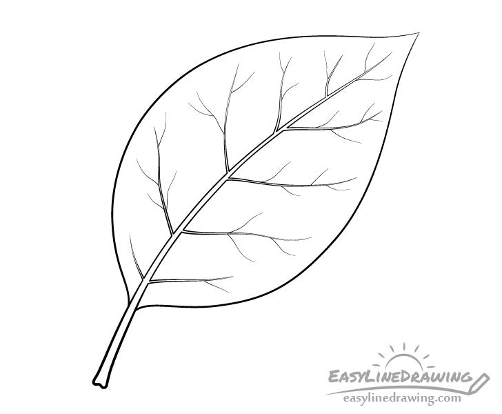 Leaf line drawing