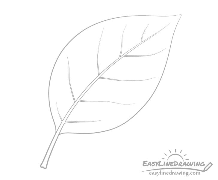 Leaf veins drawing