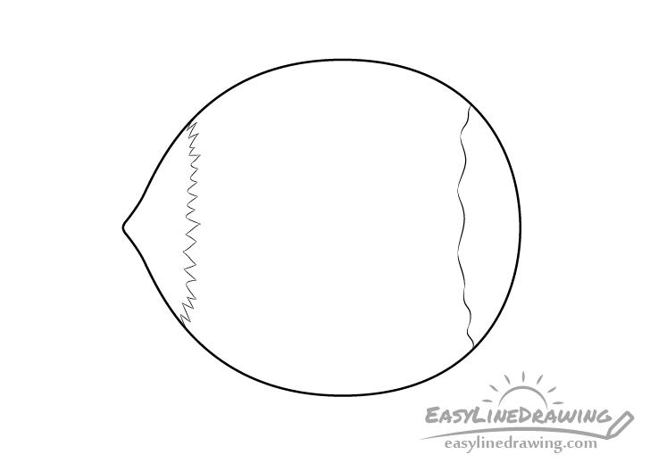 Hazelnut line drawing