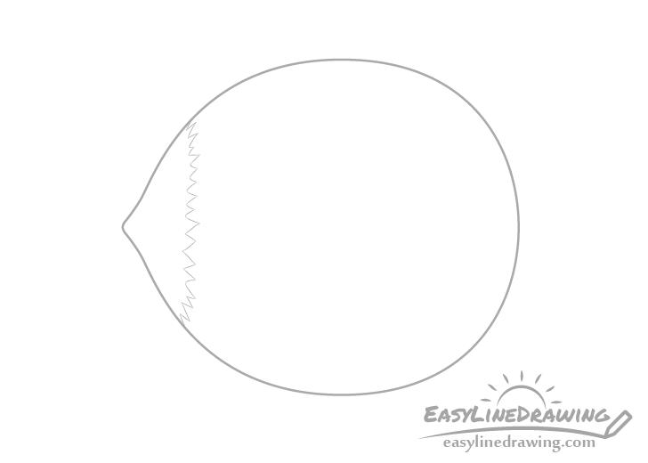 Hazelnut tip drawing