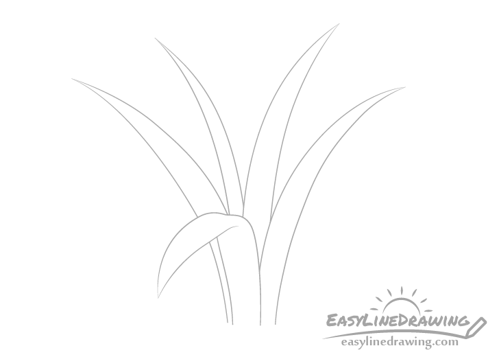 Blades of grass center drawing