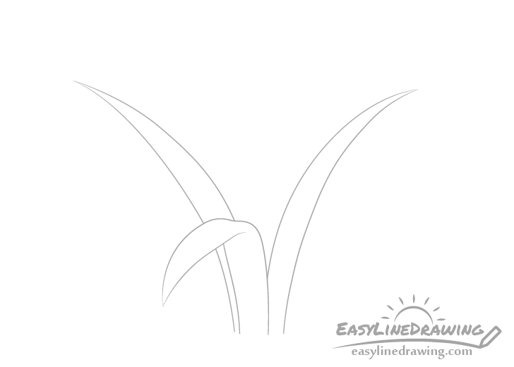 Blades of grass sides drawing