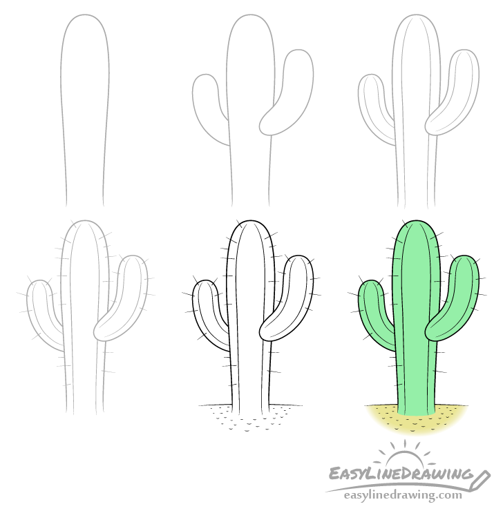 Cactus drawing step by step