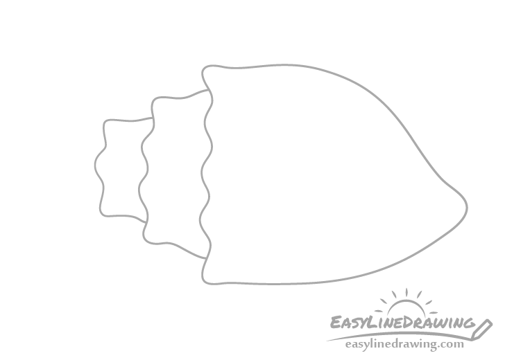 Conch shell sections drawing