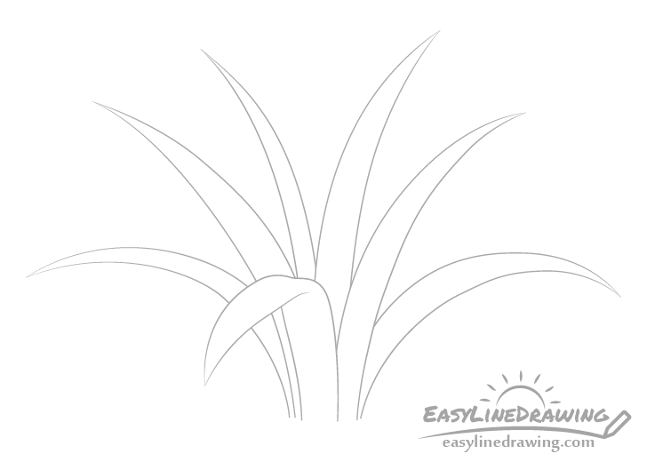 Grass clump drawing