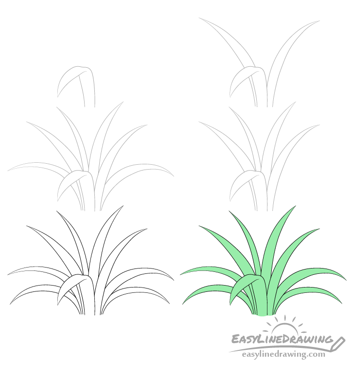 Grass drawing step by step