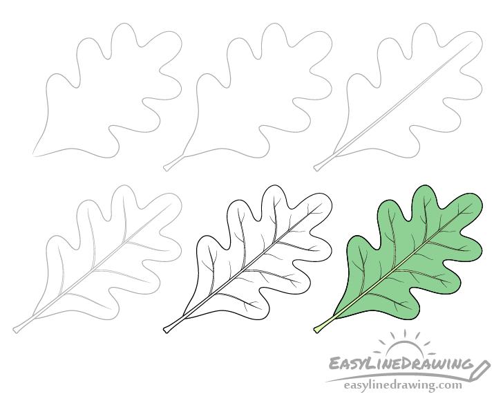 Oak leaf drawing step by step