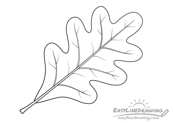 Oak leaf line drawing