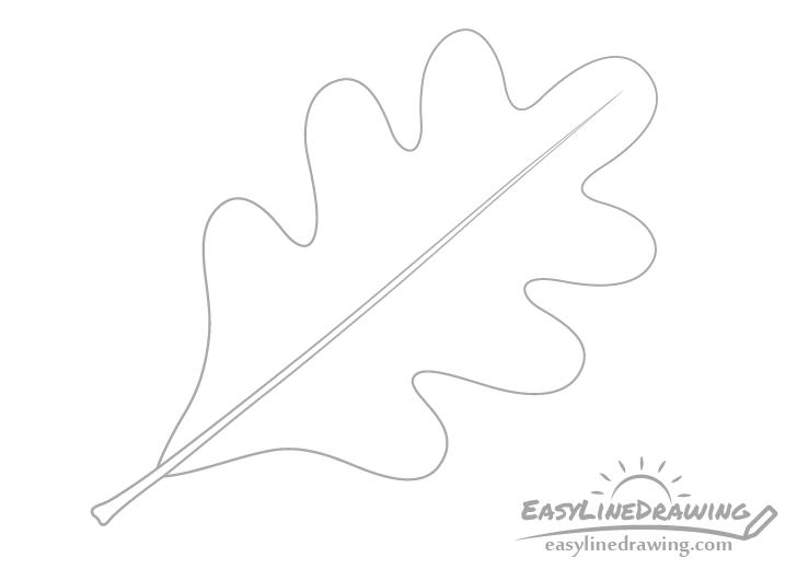 Oak leaf midrib drawing