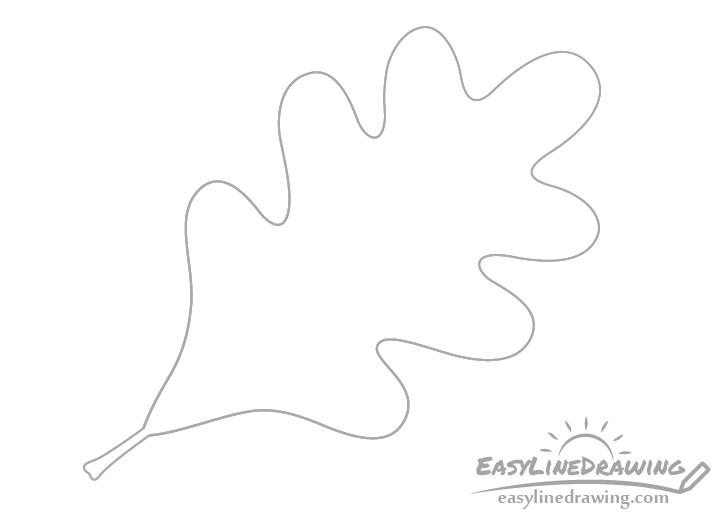 Oak leaf petiole drawing