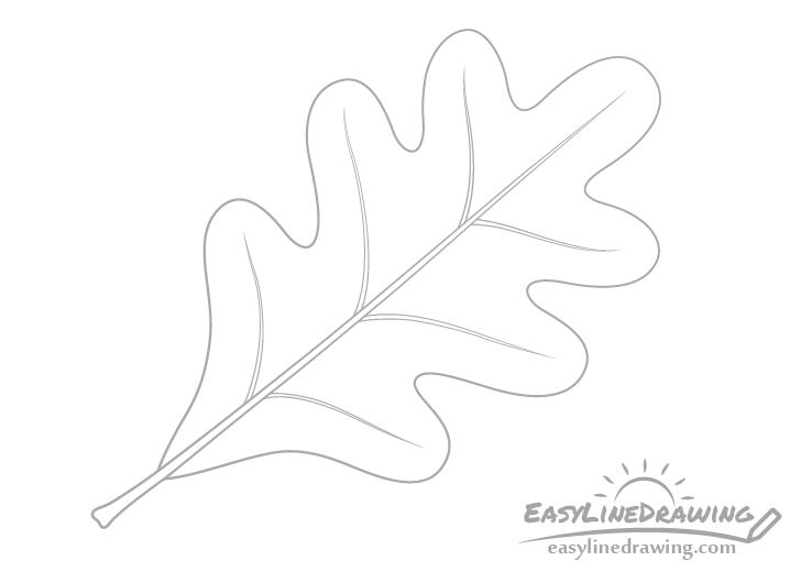 Oak leaf veins drawing