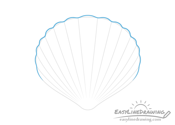 Scallop shell curves drawing