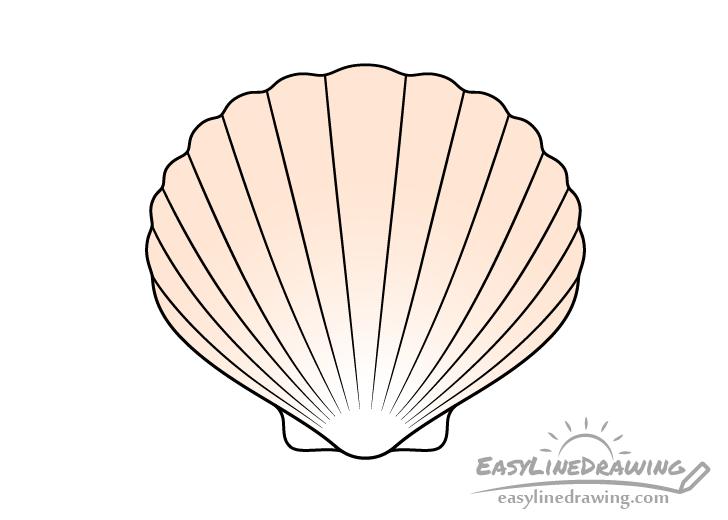 Scallop shell drawing