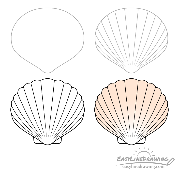 Scallop shell drawing step by step