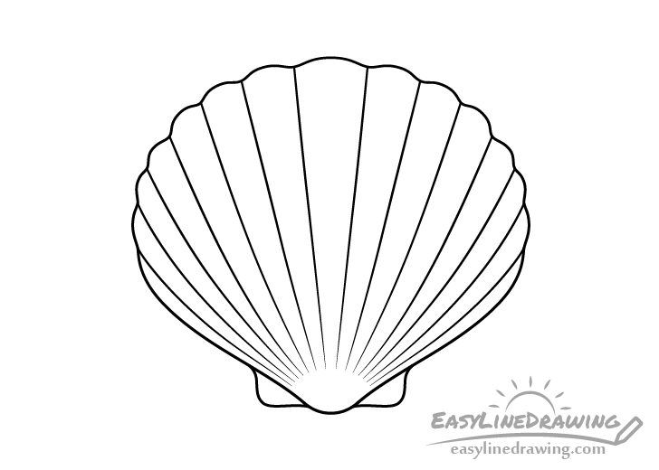Scallop shell line drawing