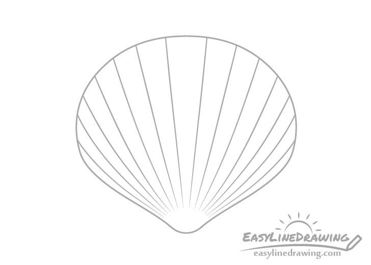 Scallop shell lines drawing