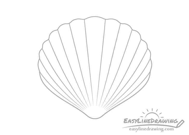 Scallop shell with curves drawing
