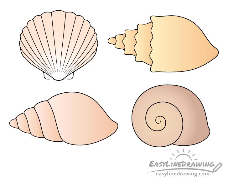 Shells drawing