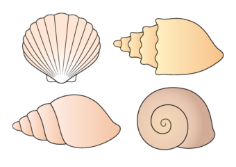 How to Draw Shells Step by Step