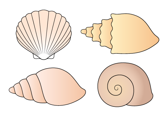 Shells drawing tutorial