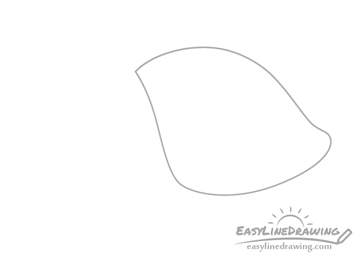 Tulip shell base drawing