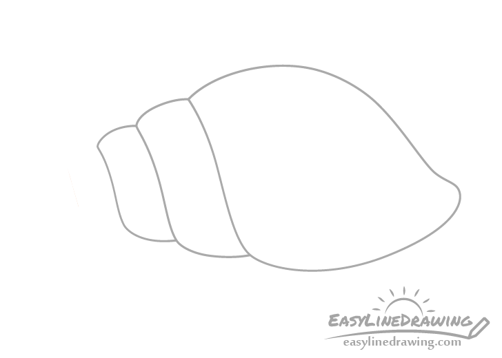 Tulip shell sections drawing
