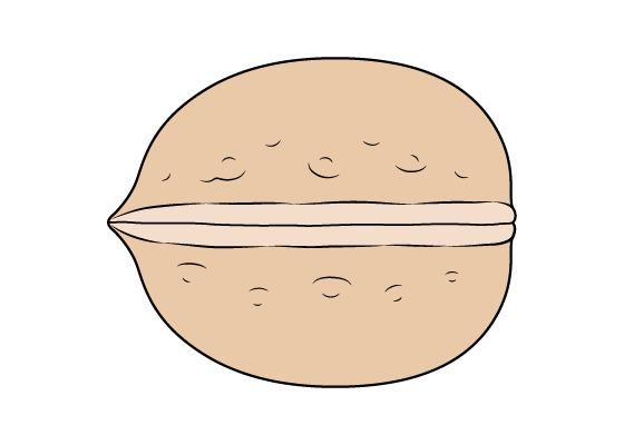 Walnut drawing tutorial