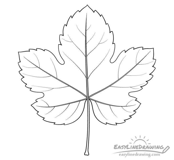 Grape leaf line drawing