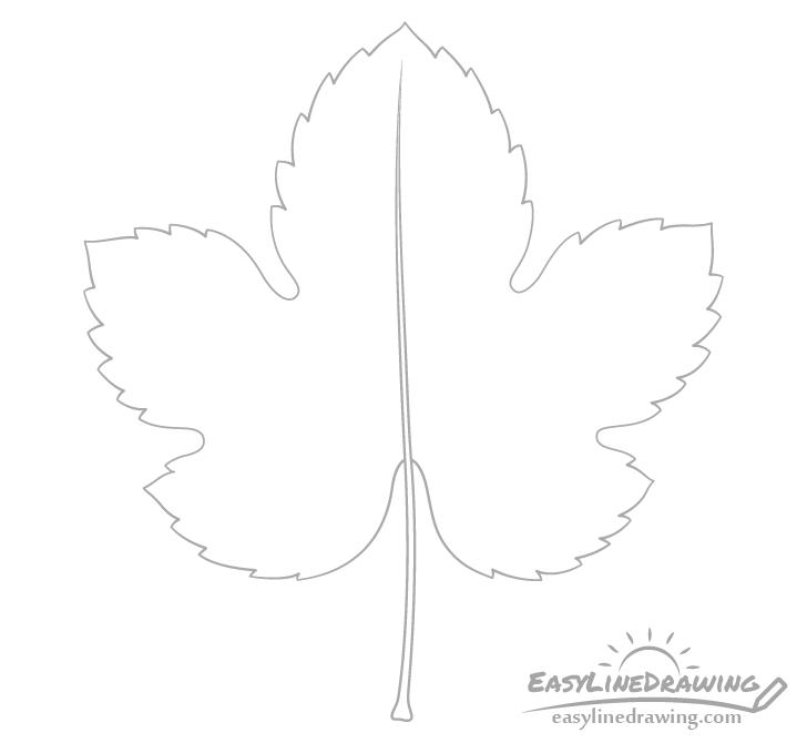 Grape leaf petiole and midrib drawing