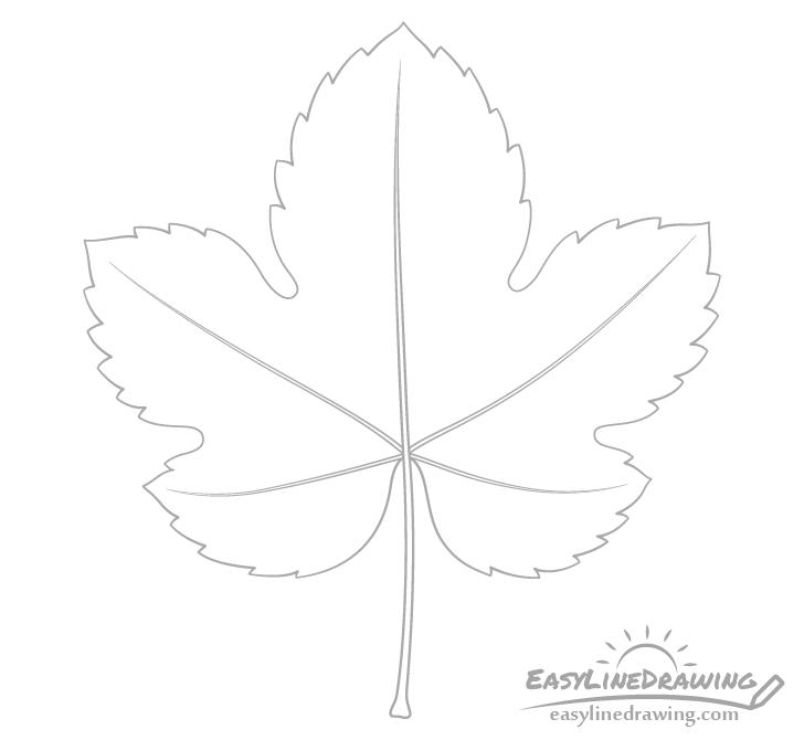 Grape leaf veins drawing