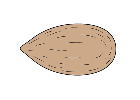 Almond drawing tutorial