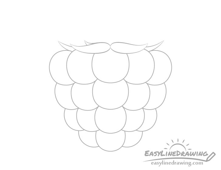 Raspberry back sepals drawing